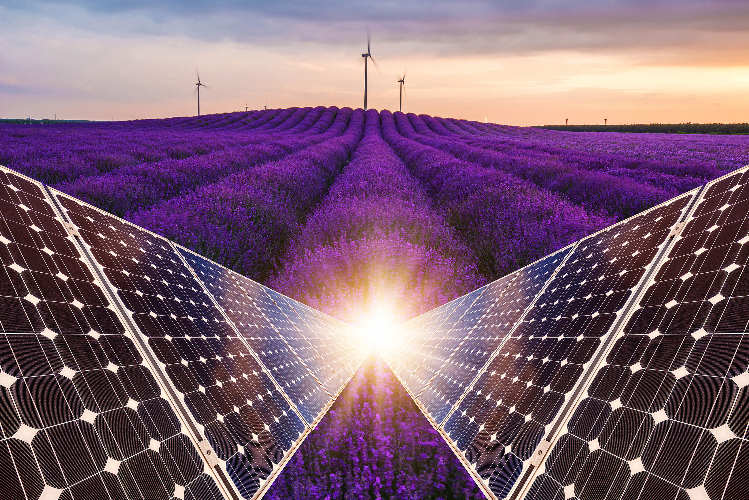 Lavender field with solar panels 54375