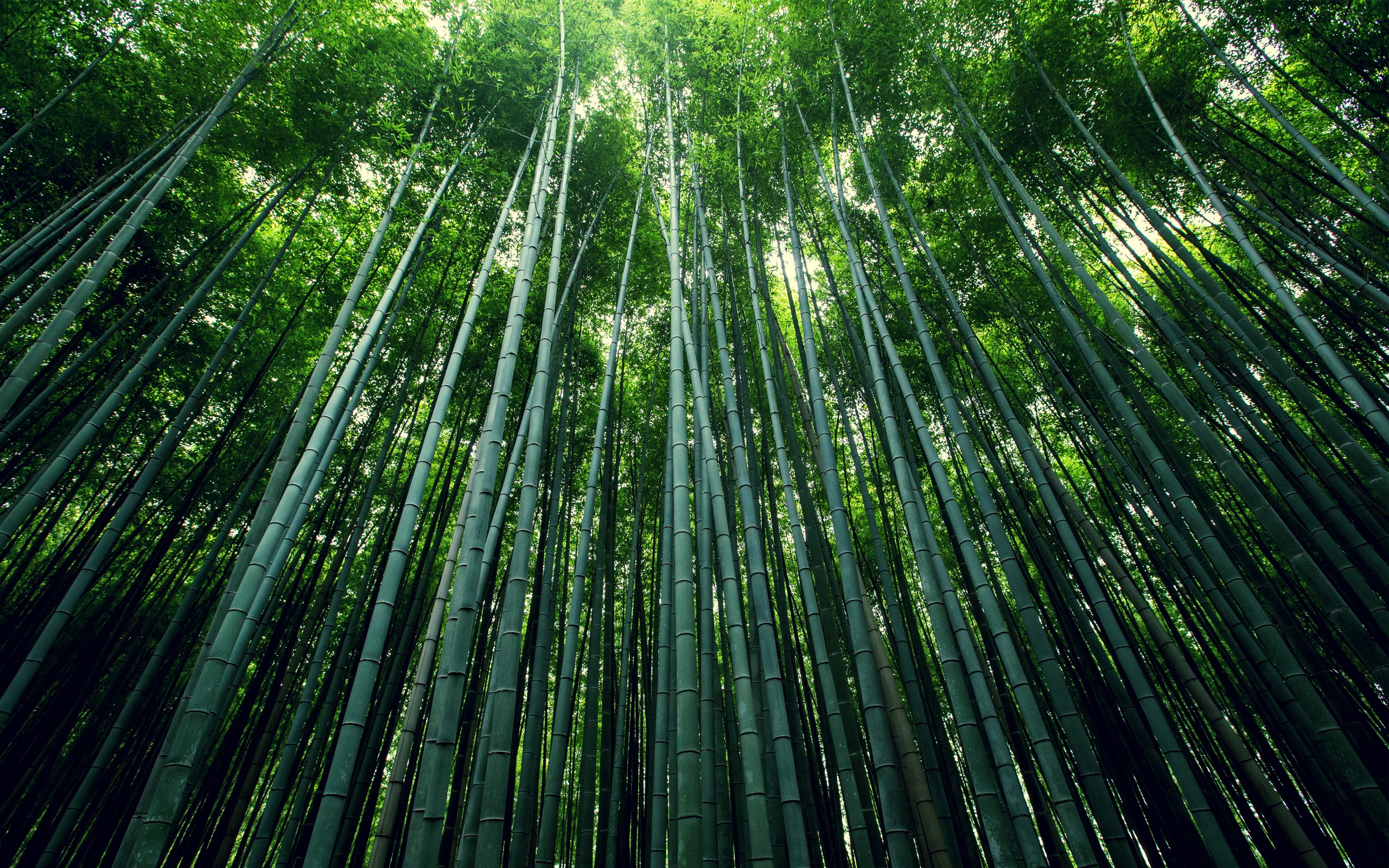 Emerald bamboo forest 54419