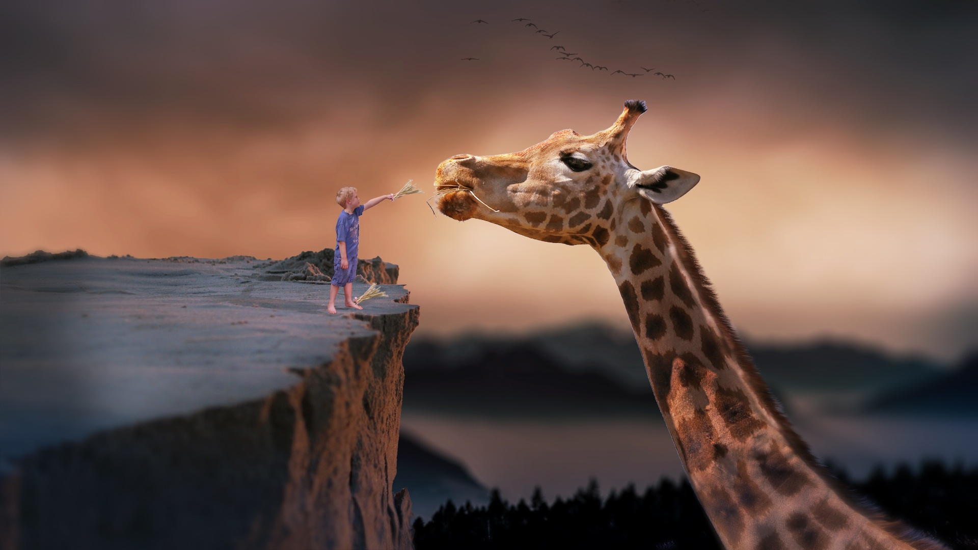 Boy feeding giraffe 54470