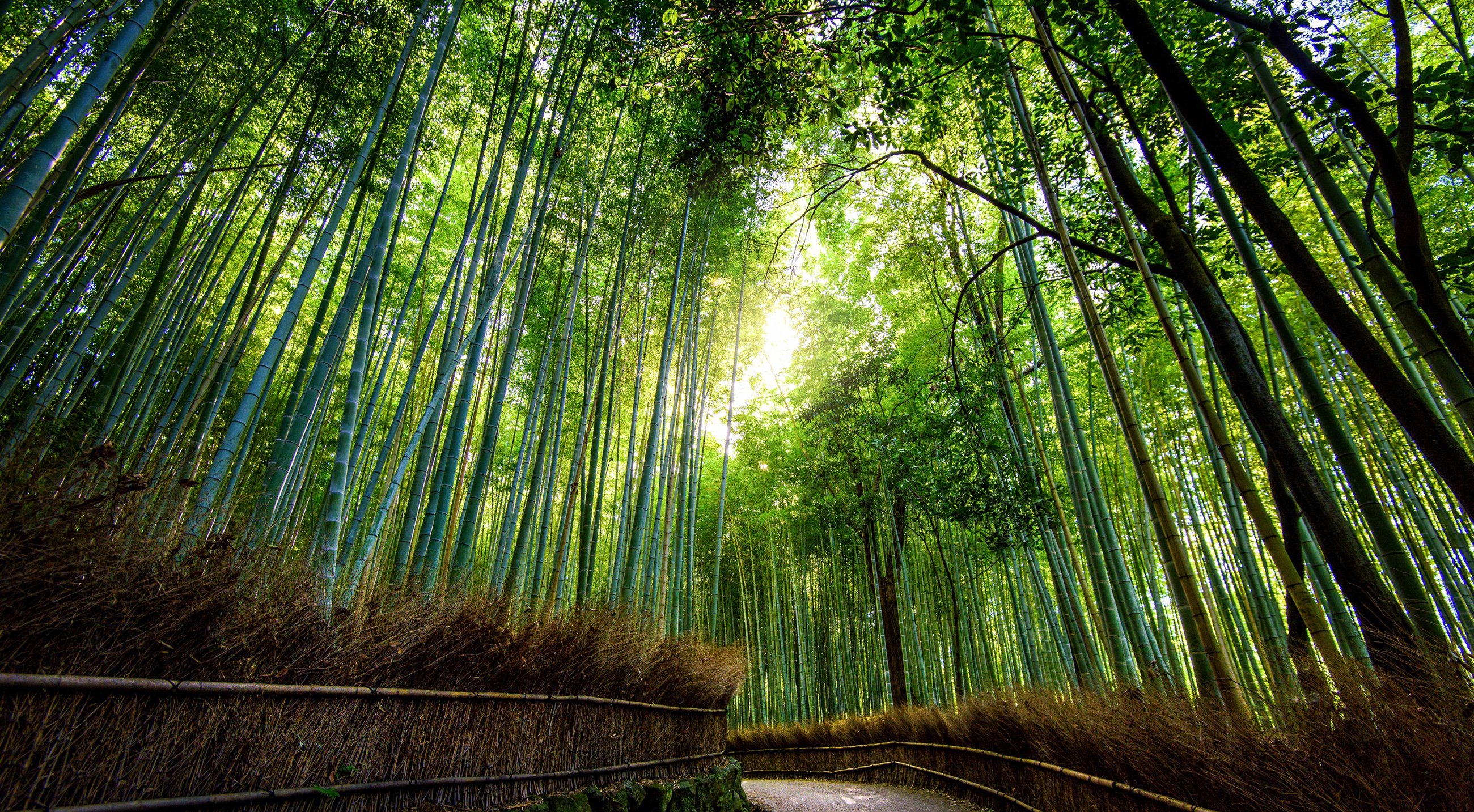 Bamboo forest 54615