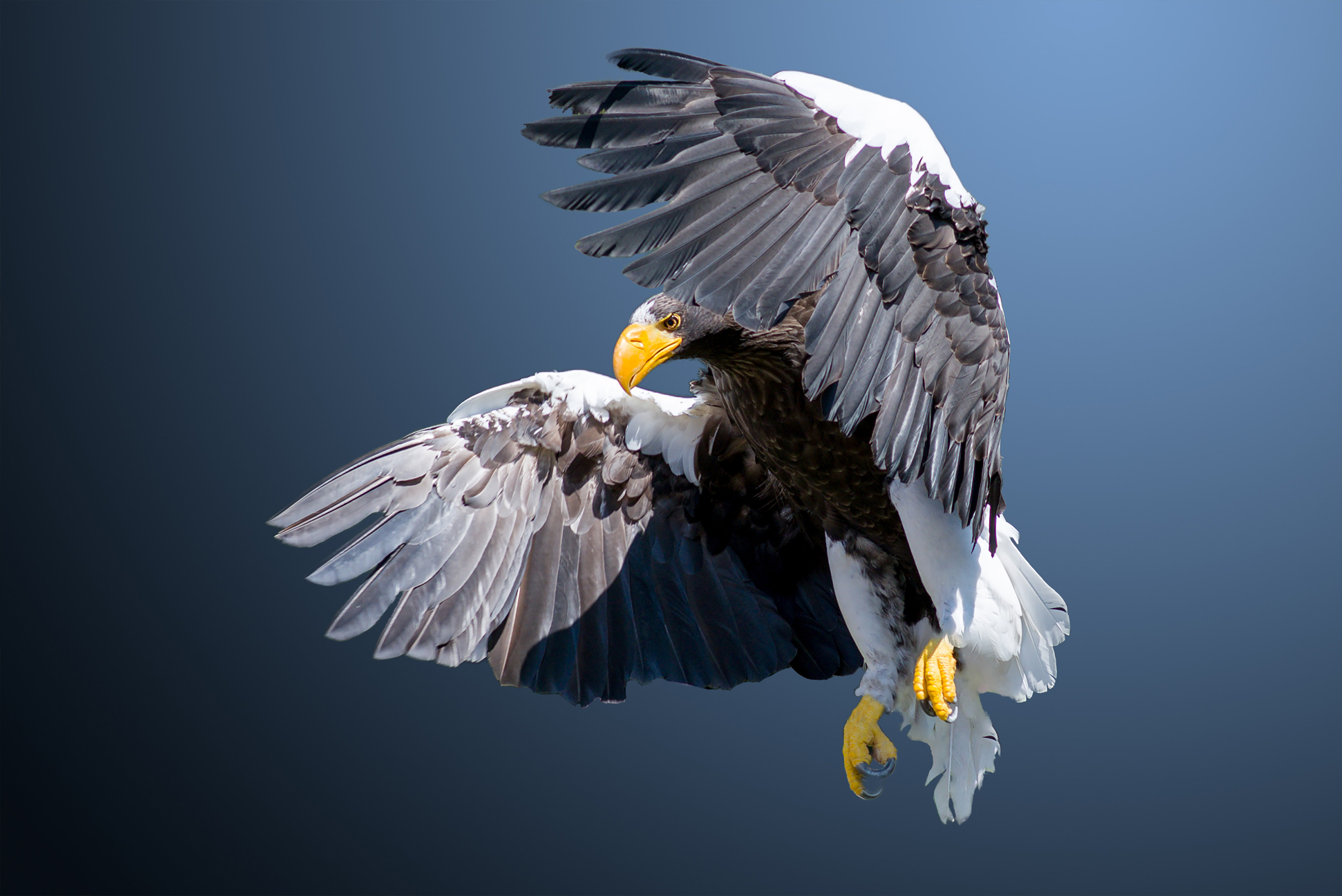 Eagle flying in the air 54656