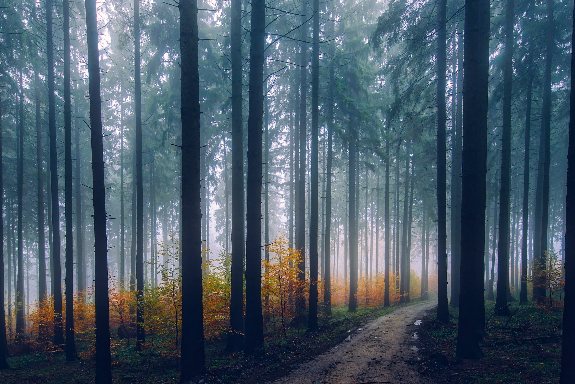 Misty forest 54949