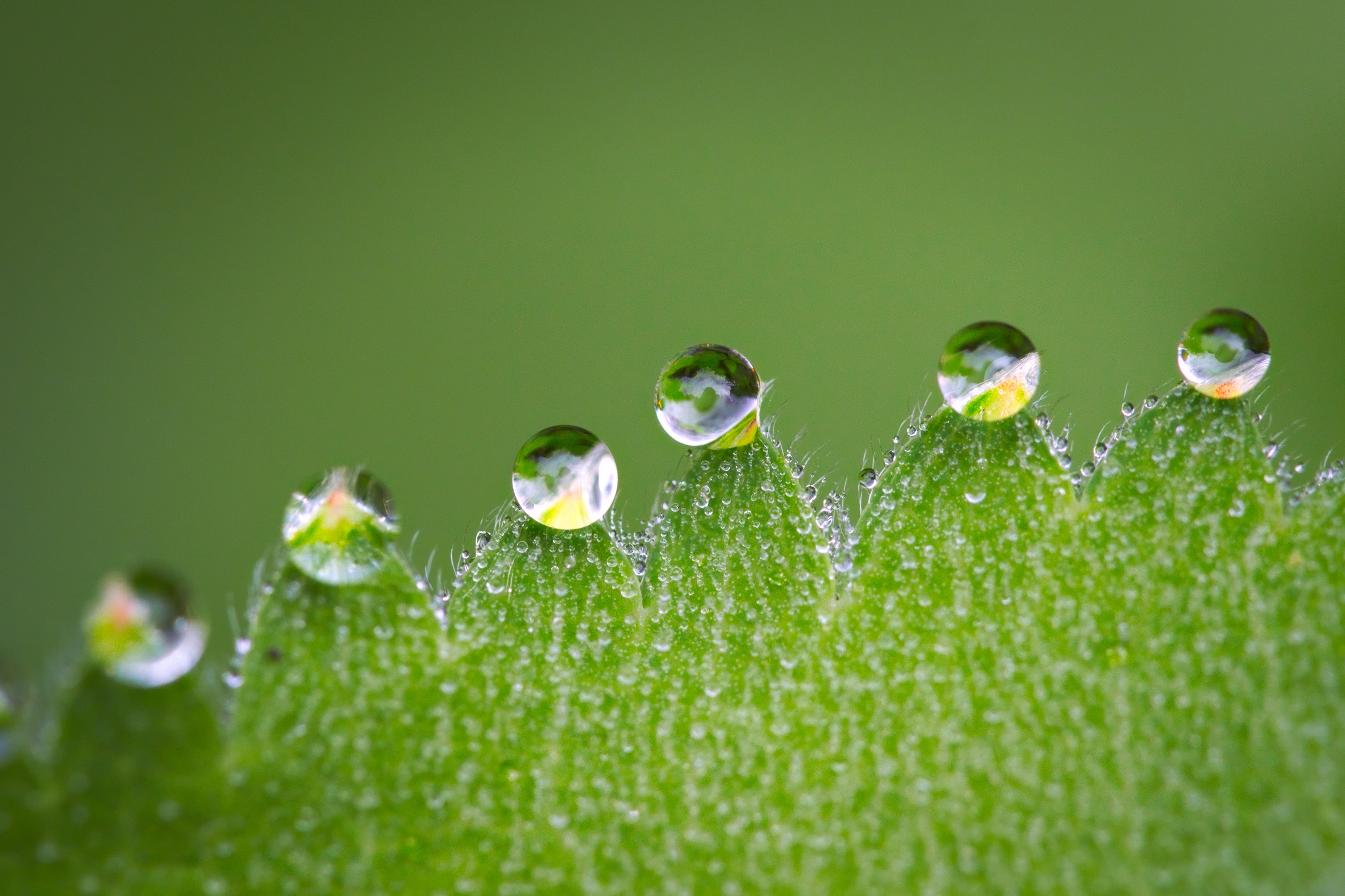 Crystal water drops on green leaves 55605