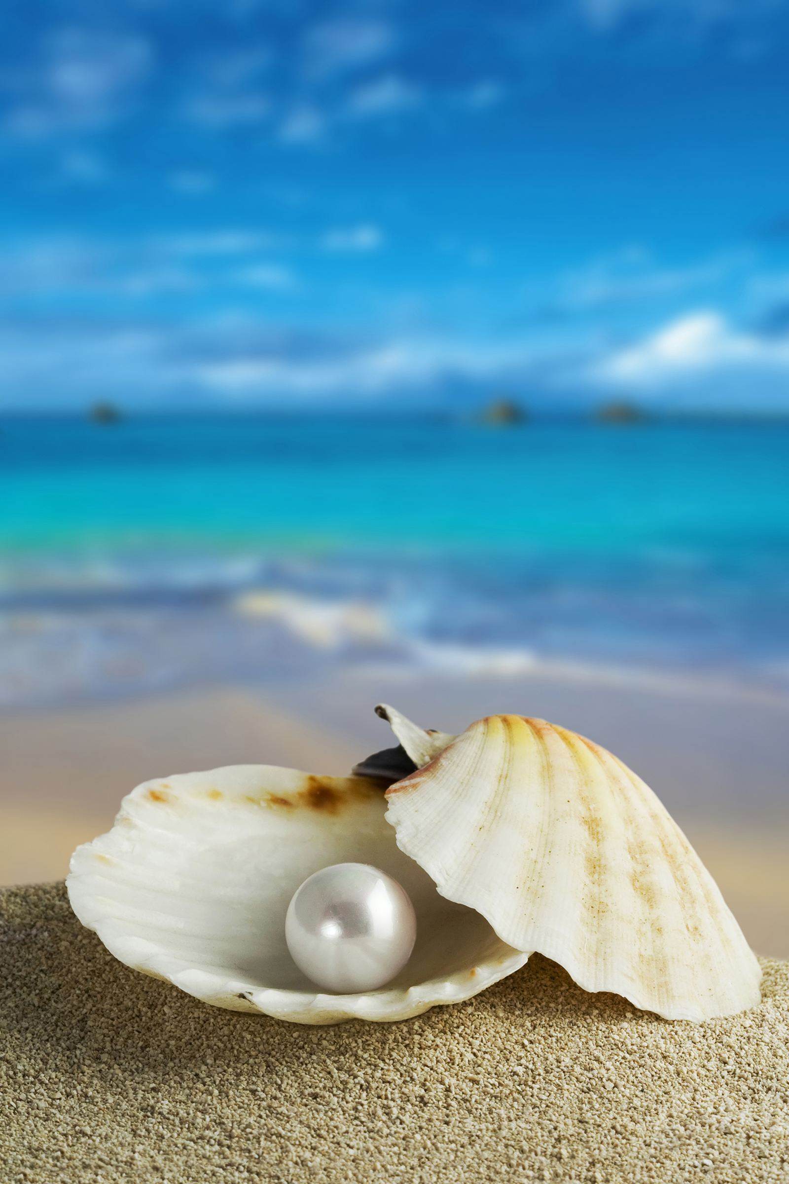 Seashells on the beach by the sea, pearls 55606
