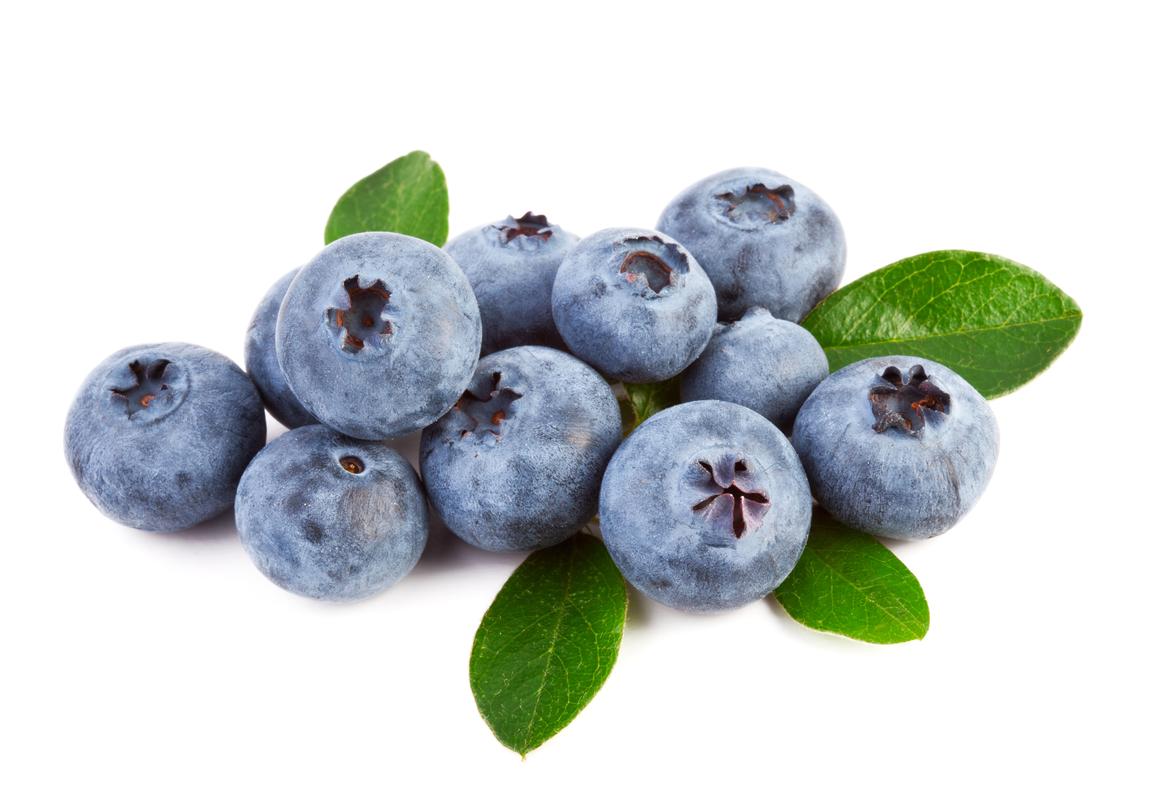 Fresh blueberry 55779