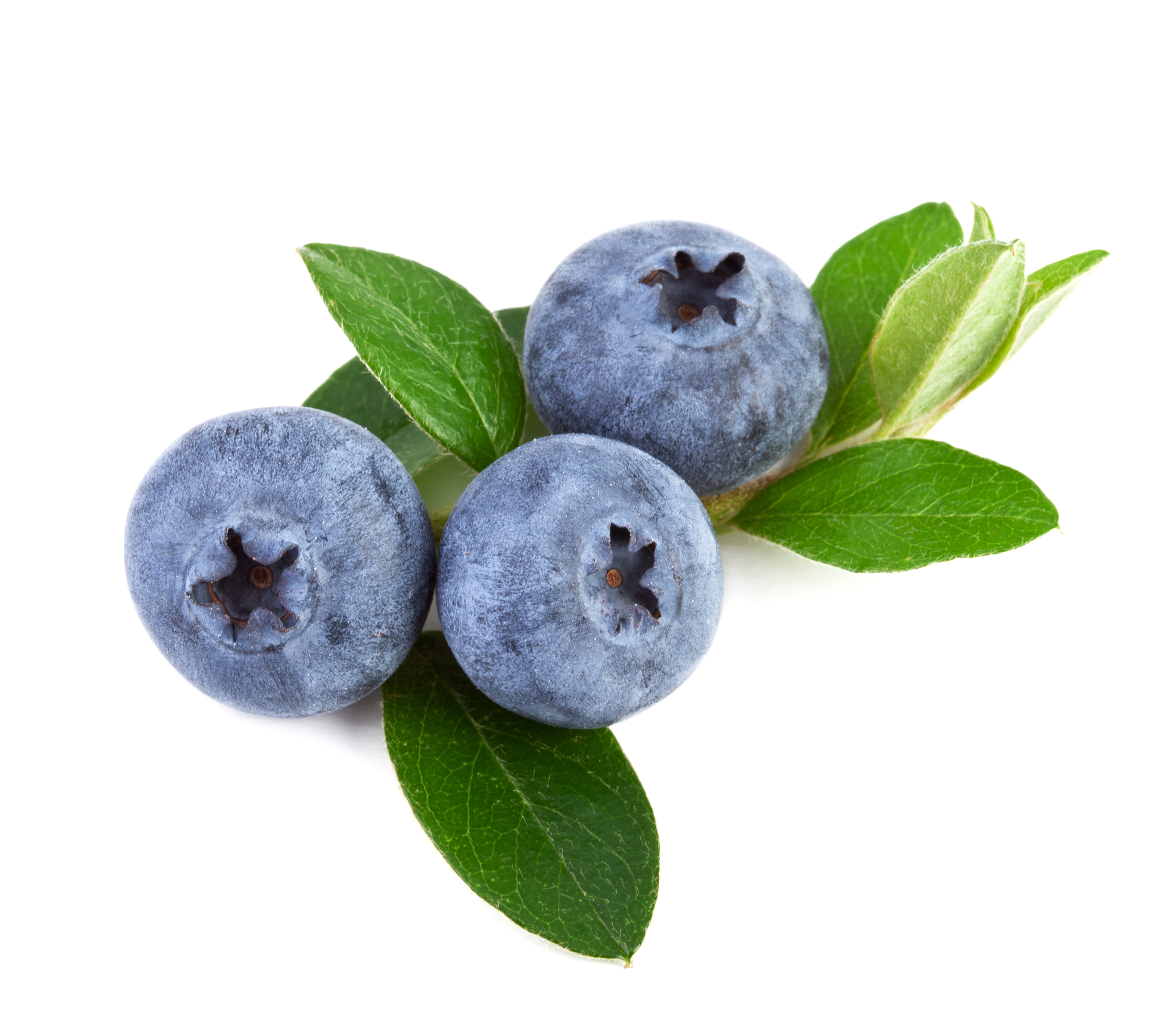 Fresh blueberry 55808