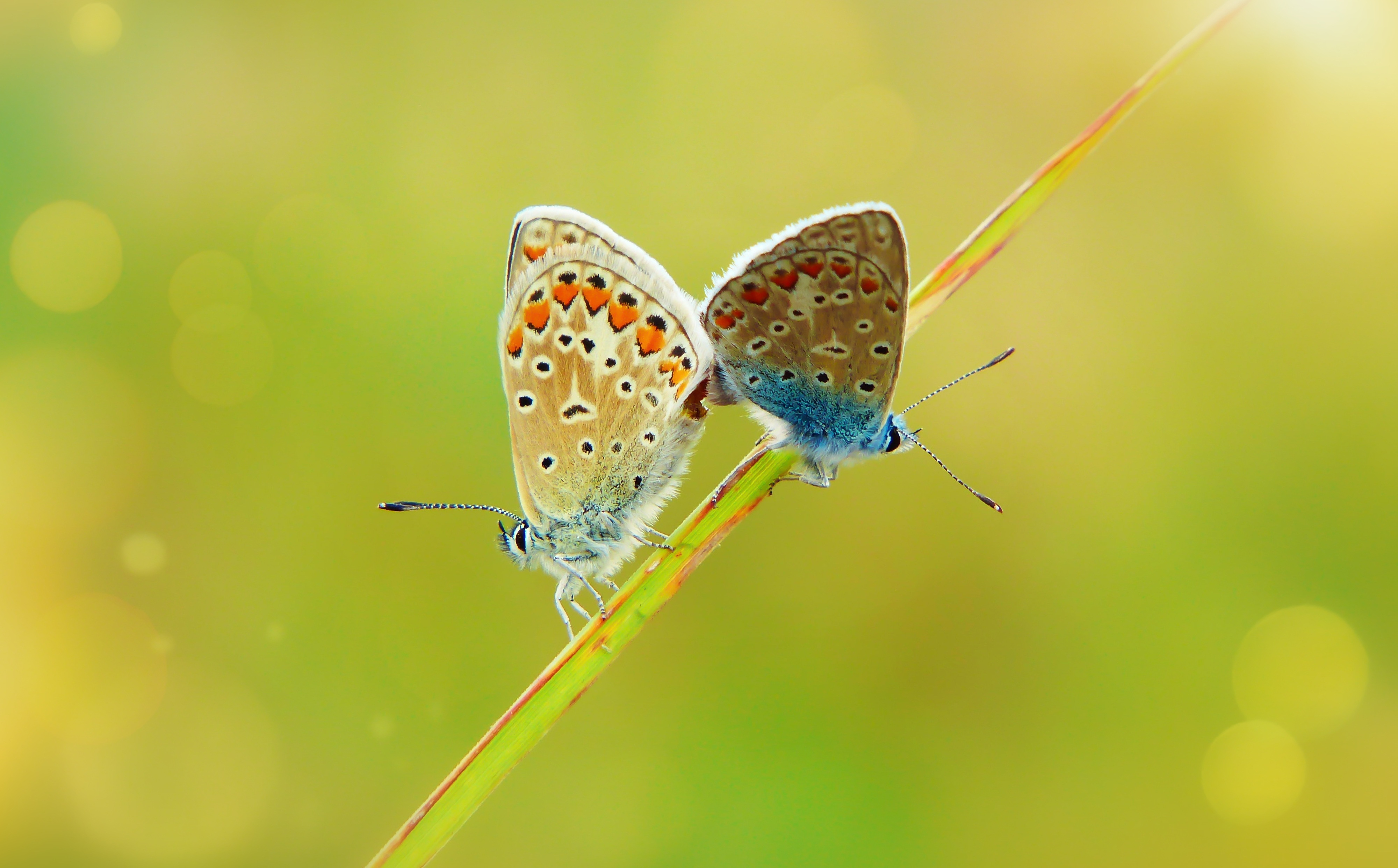 Two butterflies 55883