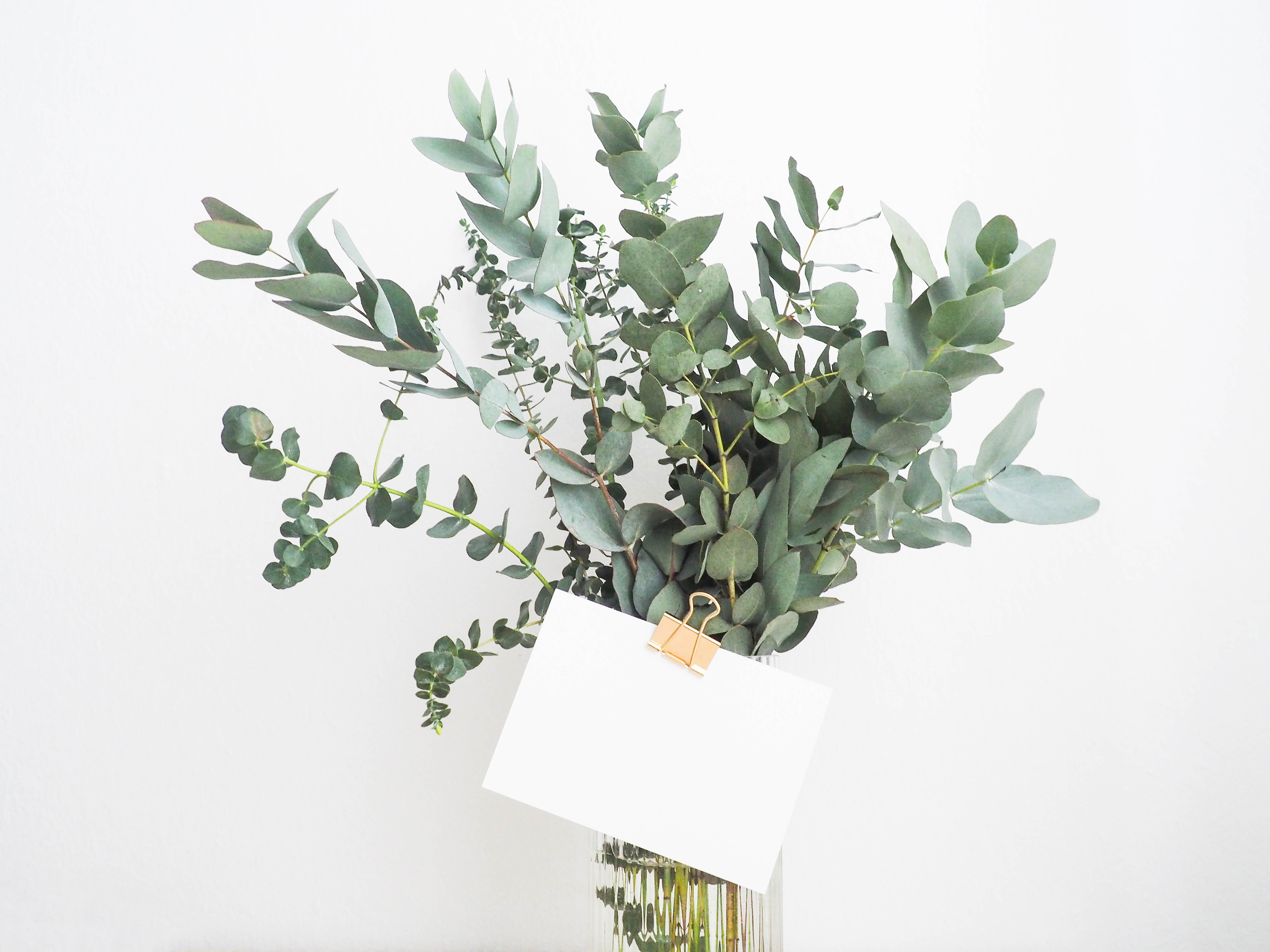 Eucalyptus leaves and cards 55994