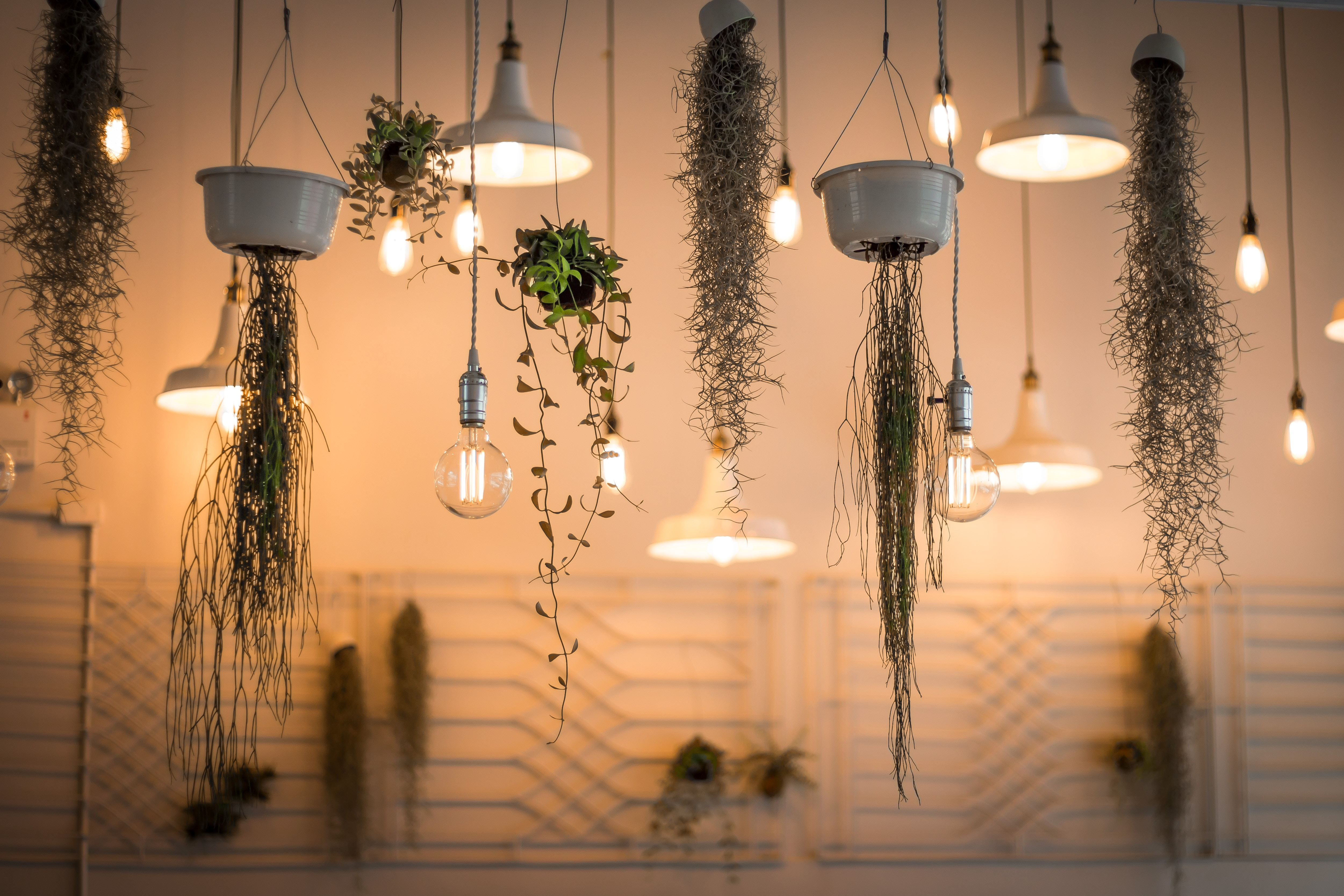 Plant vine with lit chandelier 56082