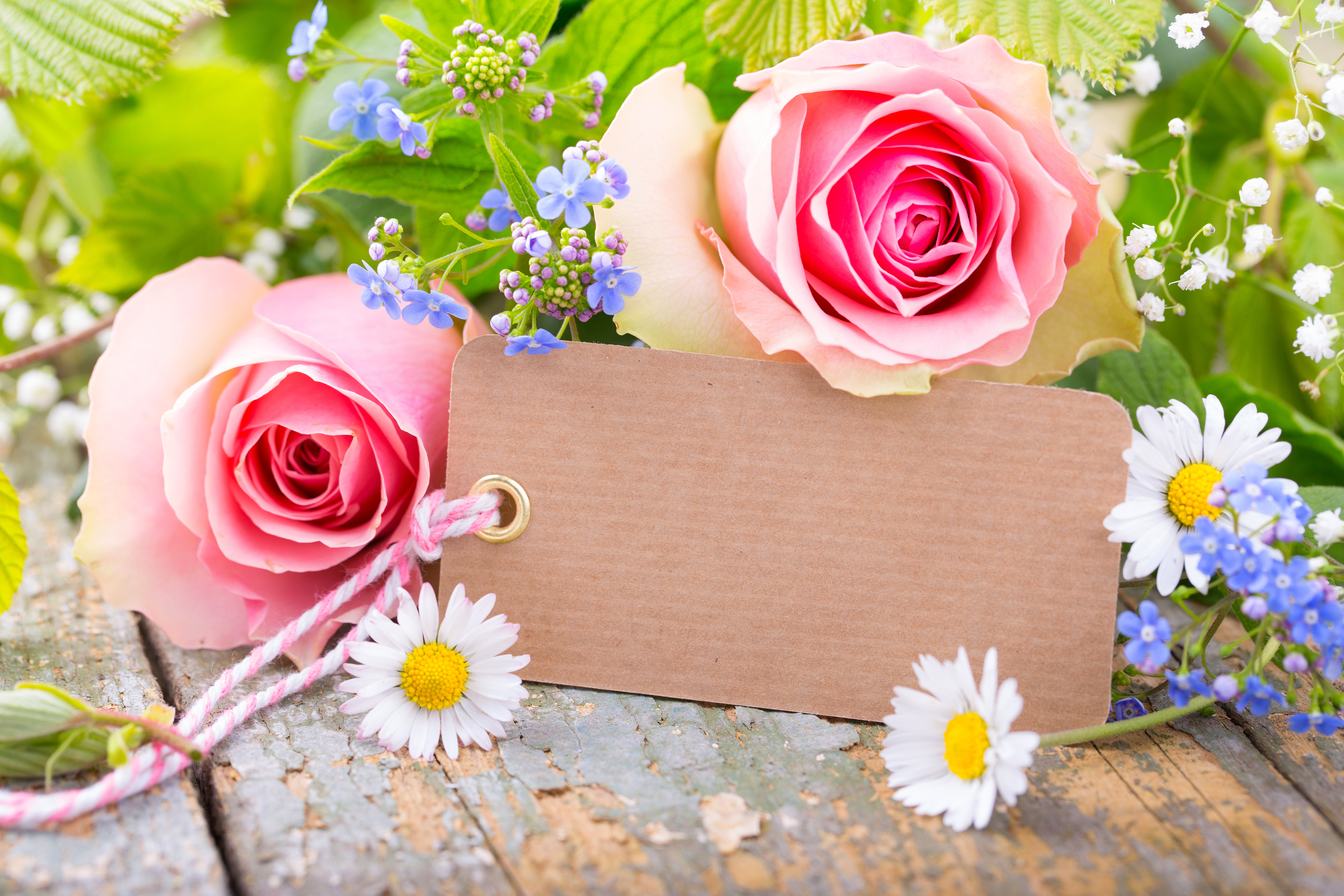 Daisy rose flower and paper tag 56187