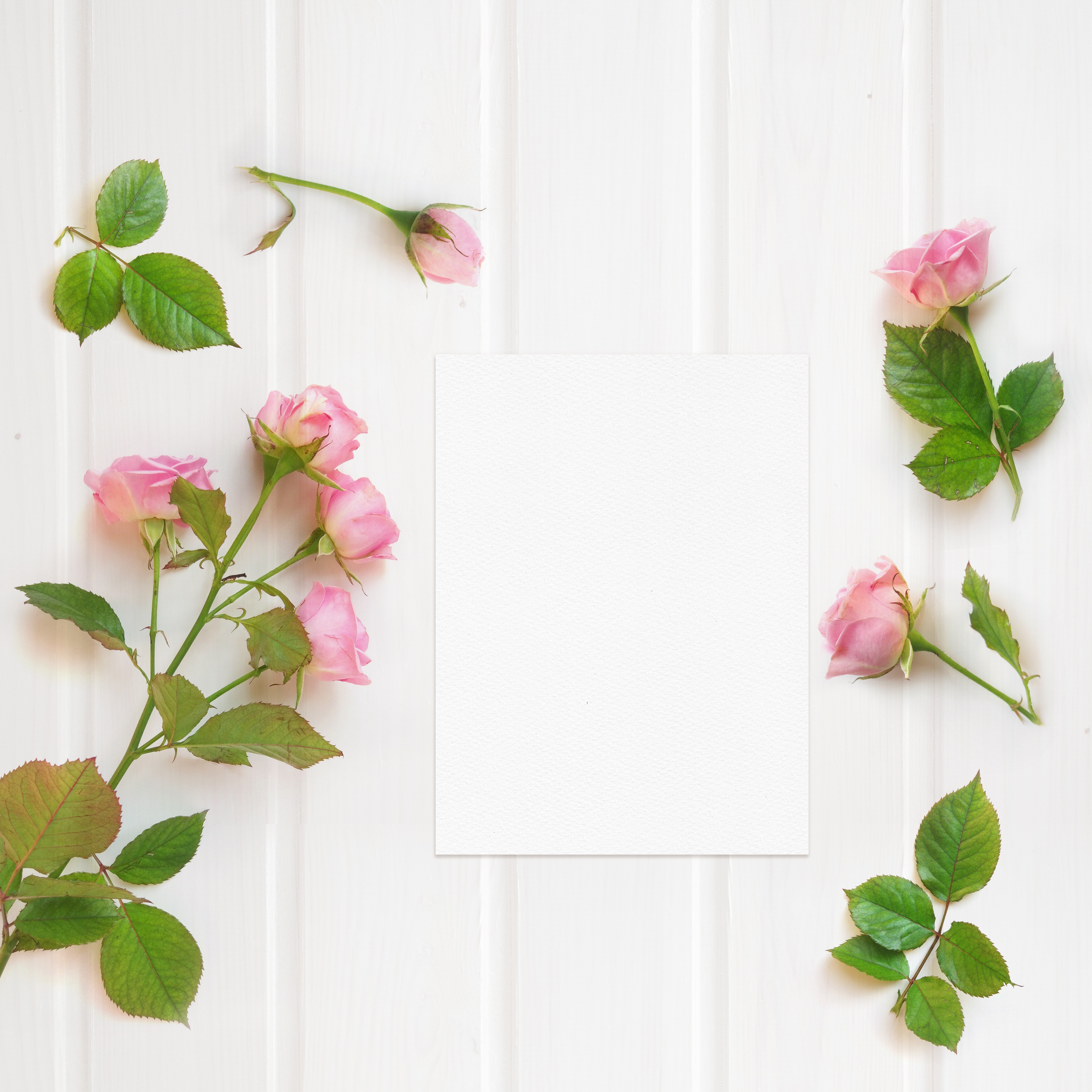 Green leaf with pink rose 56203