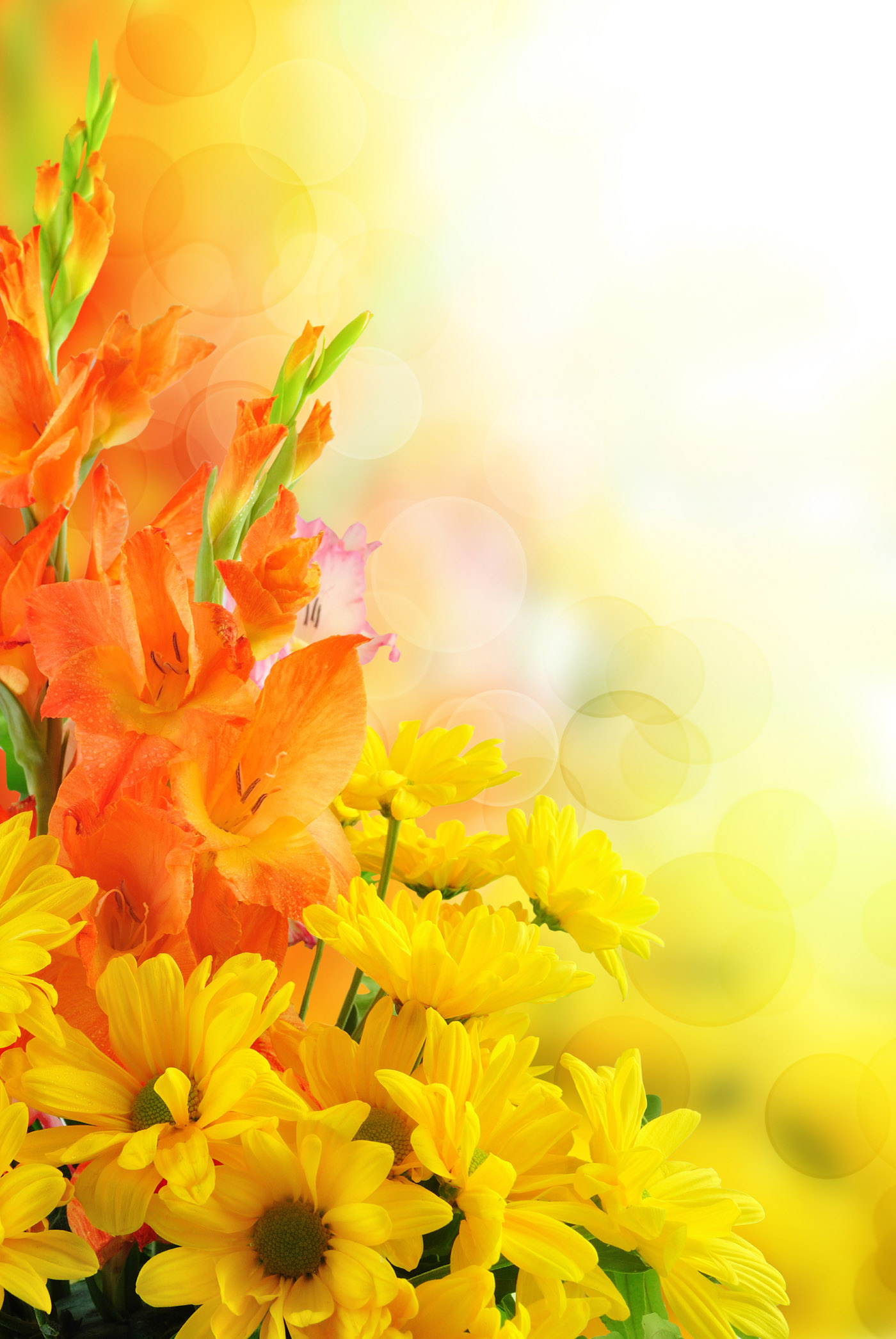 Floral background 31055 - Flower Wallpapers - Flowers