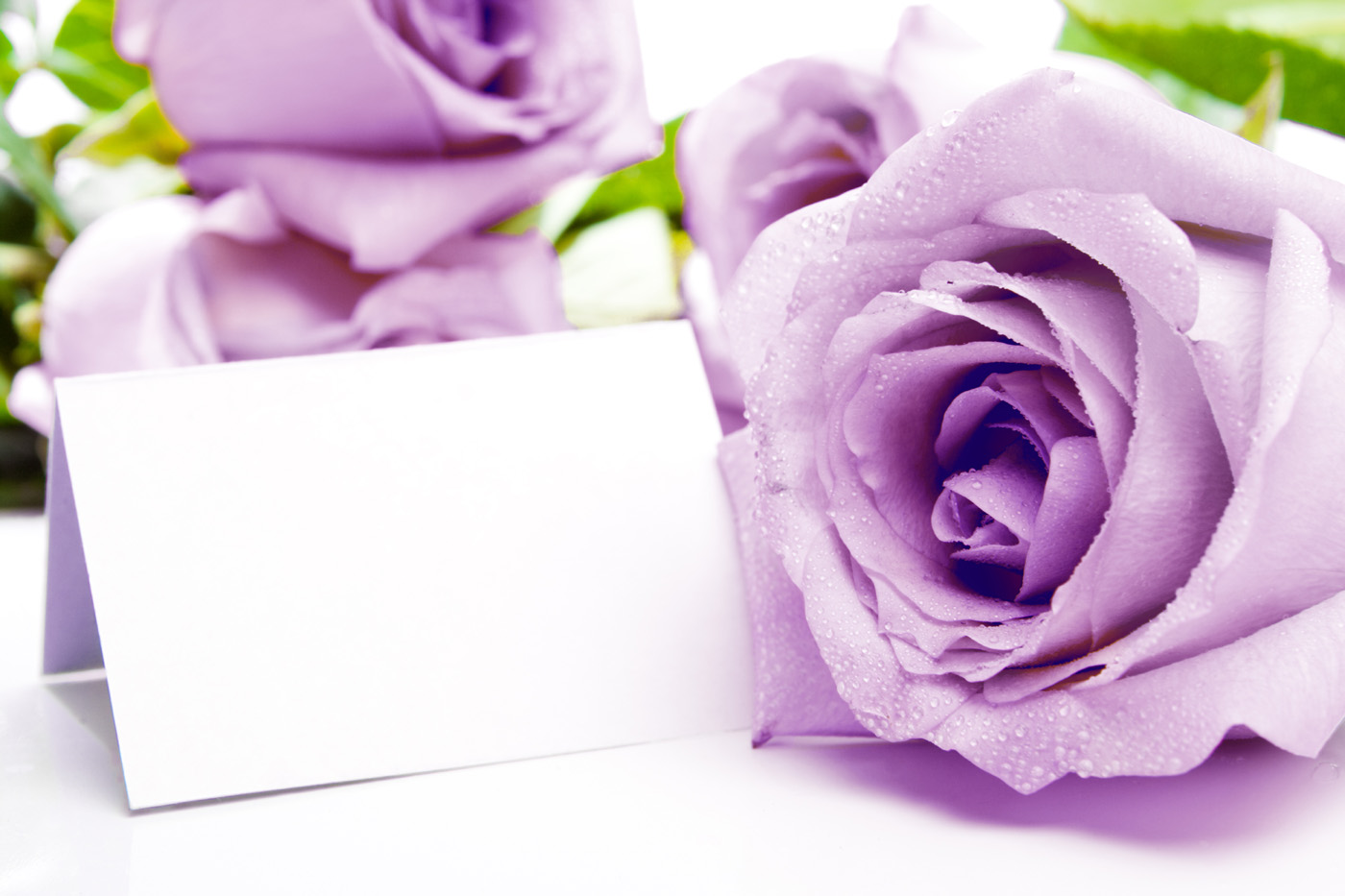 purple flowers 31132 - flower wallpapers - flowers