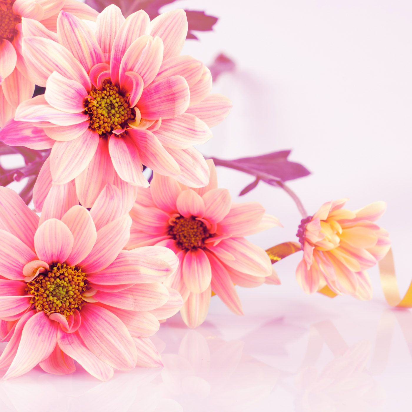 Flowers Wallpapers 31143