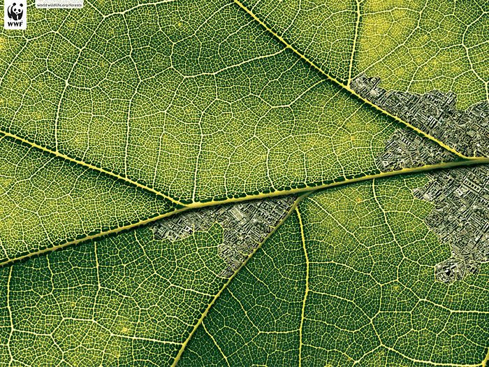WWF World Wide Fund for Nature (WWF) PSAs wallpaper 31161