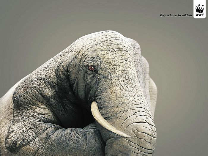 WWF World Wide Fund for Nature (WWF) PSAs wallpaper 31279