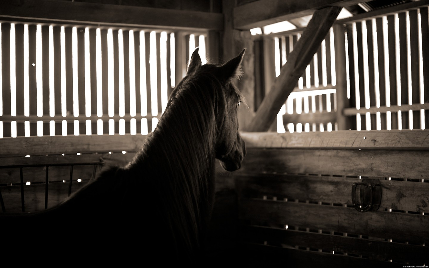 Stable horse 31521