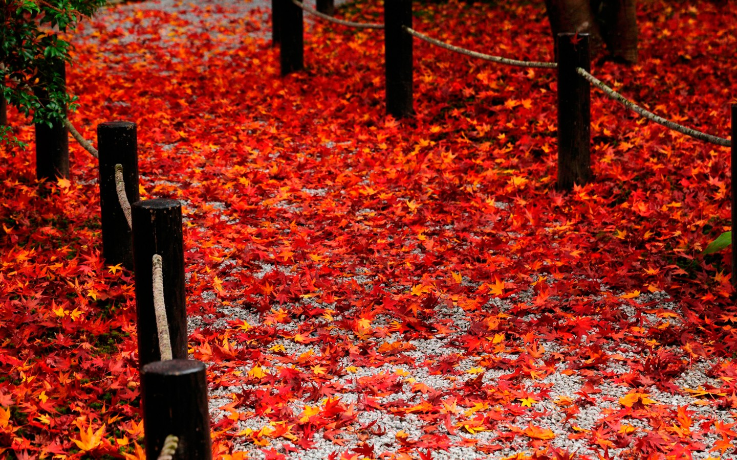 Red fallen leaves of the Road 31564