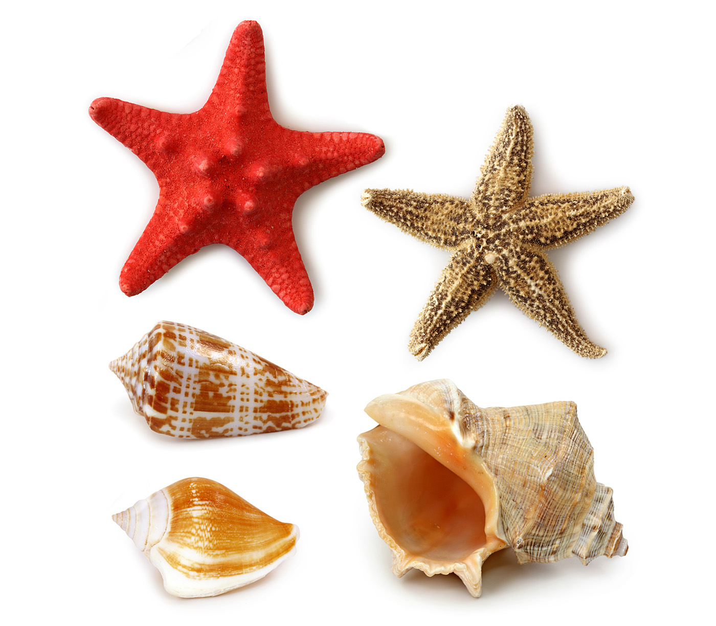 Shells and starfish 31578