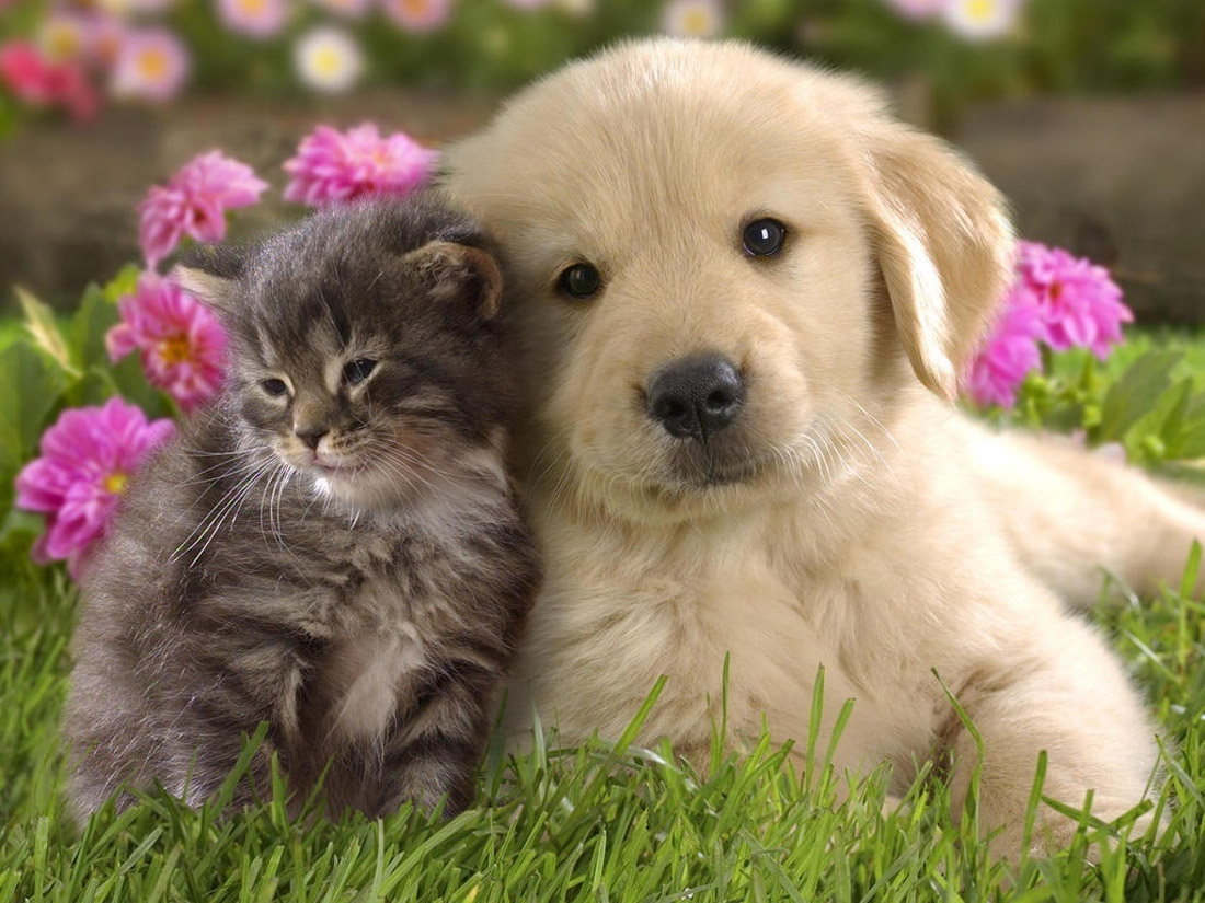 gentle kitten sitting next to the dog 32466