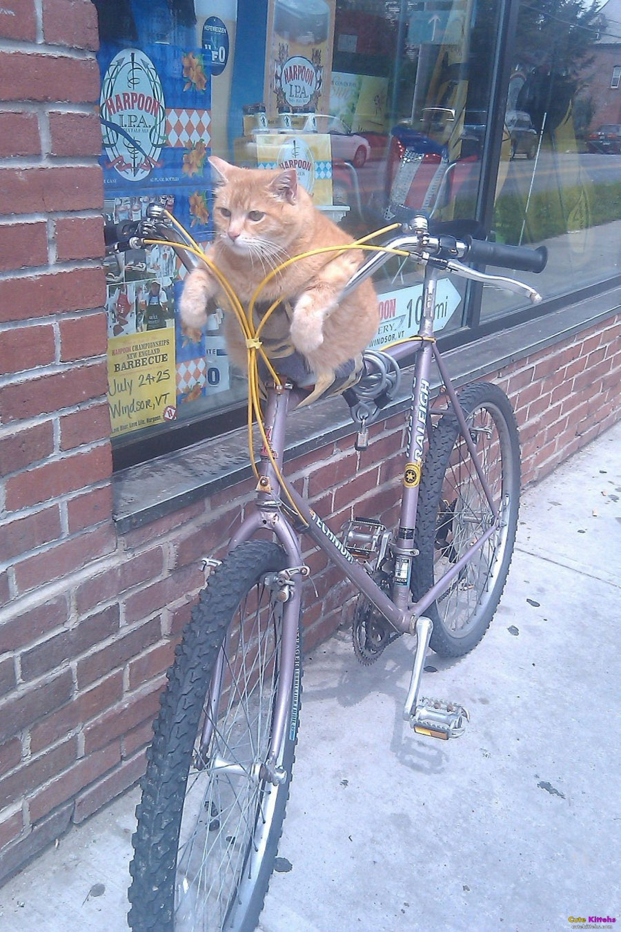 kittens cycling 32478