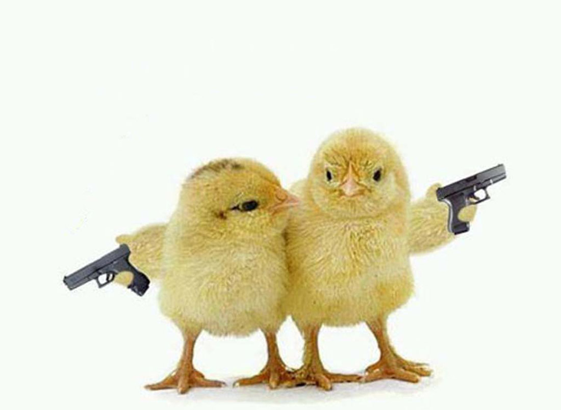 chicks with guns 32487
