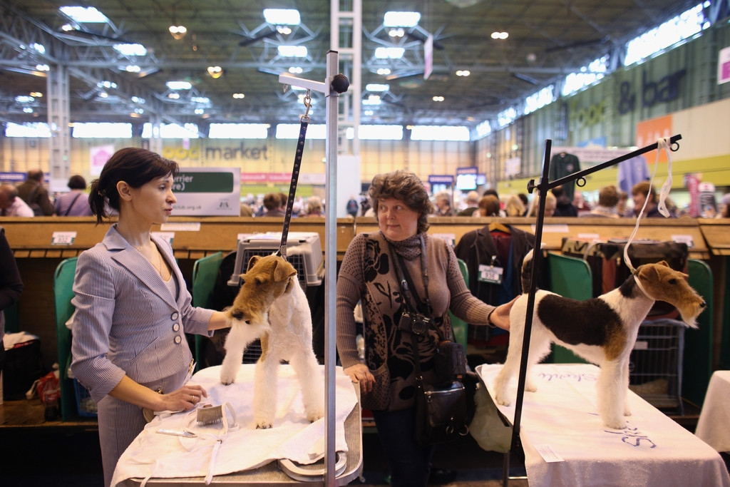 Dogs And Owners Gather For 2013 Crufts Dog Show 37124