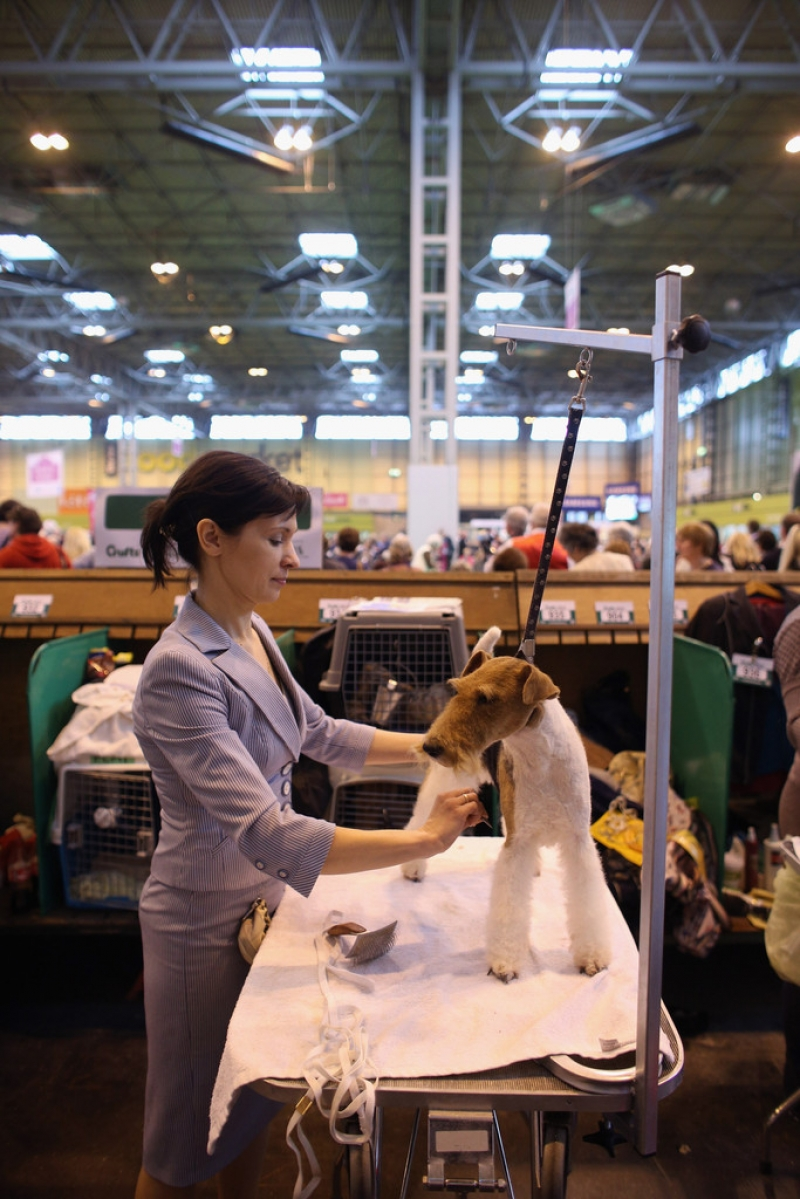 Dogs And Owners Gather For 2013 Crufts Dog Show 37127
