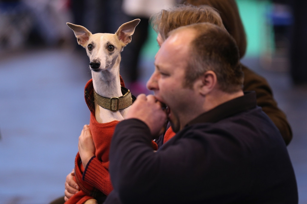 Dogs And Owners Gather For 2013 Crufts Dog Show 37154