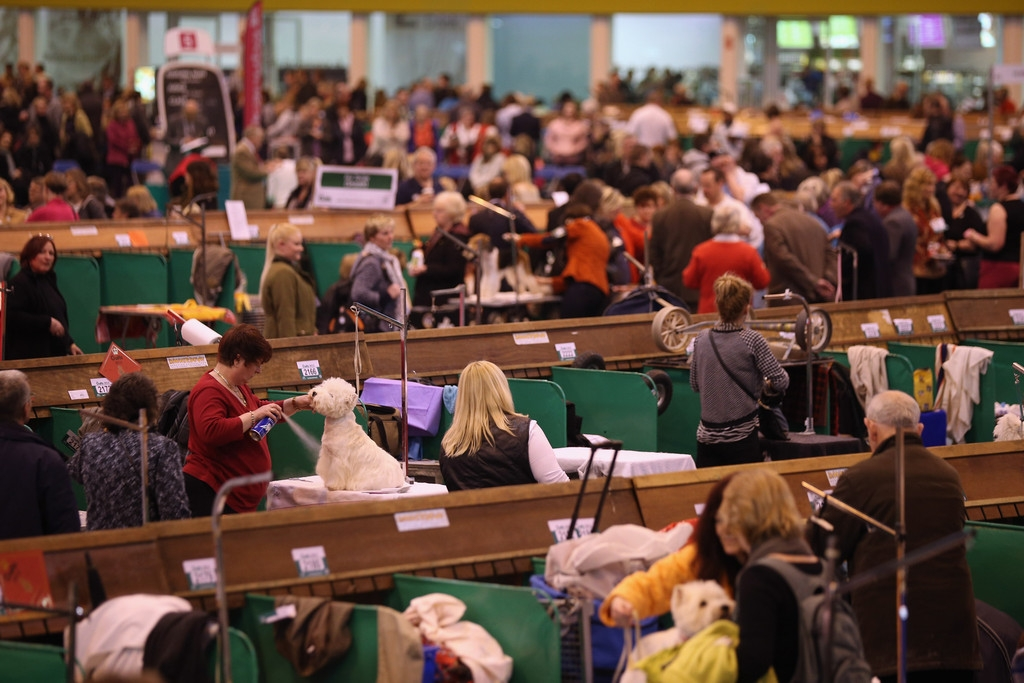 Dogs And Owners Gather For 2013 Crufts Dog Show 37157