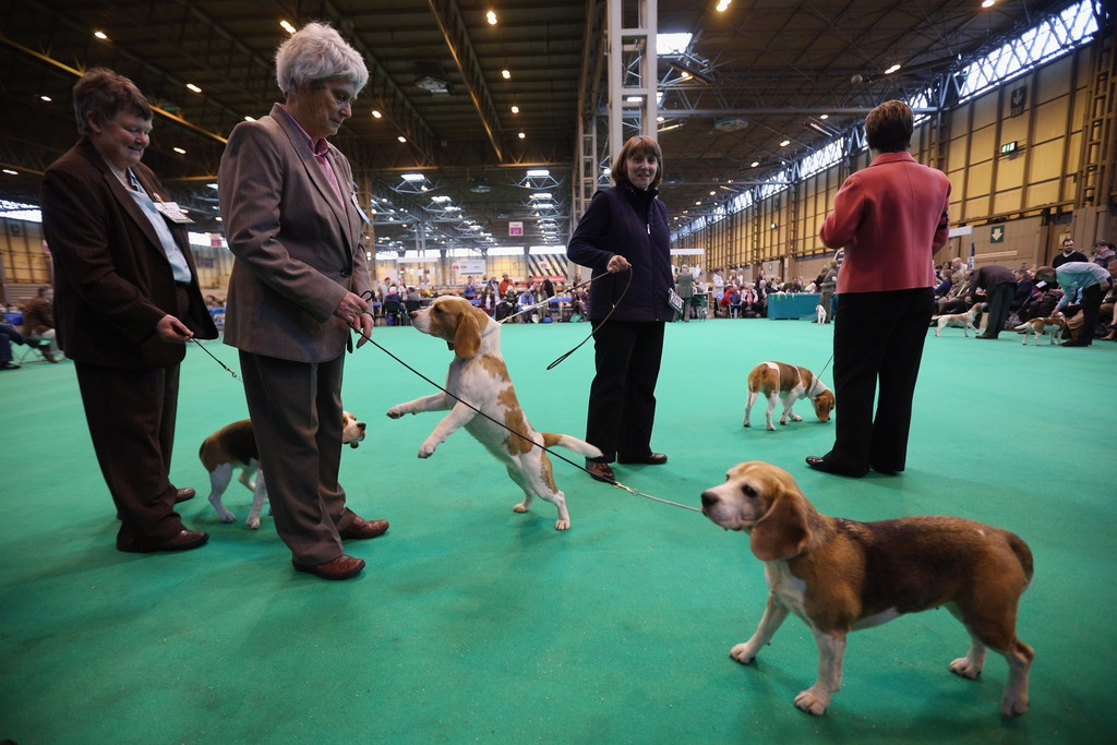 Dogs And Owners Gather For 2013 Crufts Dog Show 37161