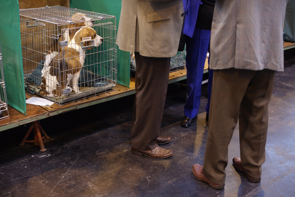 Dogs And Owners Gather For 2013 Crufts Dog Show 37175