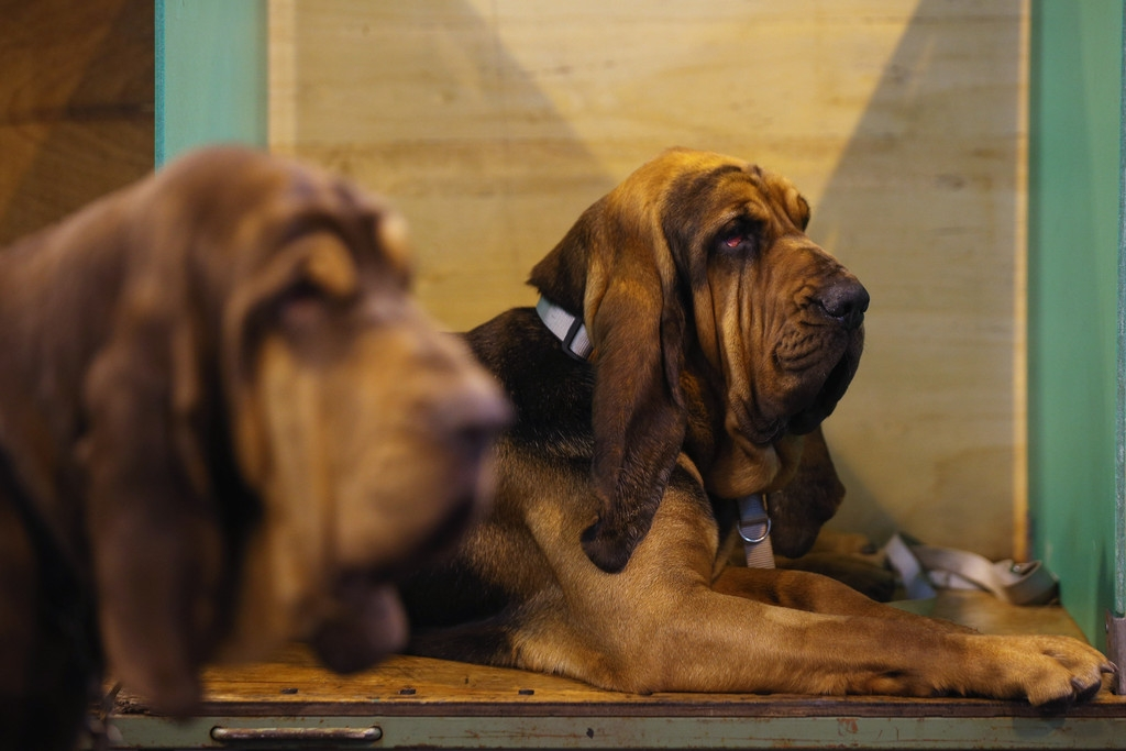 Dogs And Owners Gather For 2013 Crufts Dog Show 37185
