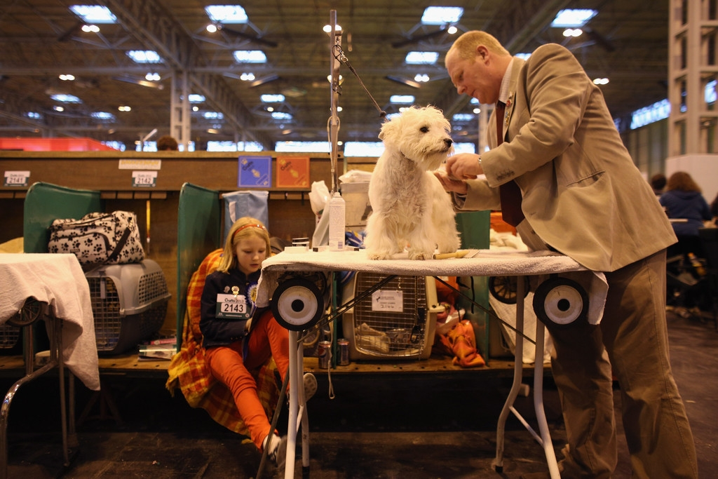 Dogs And Owners Gather For 2013 Crufts Dog Show 37200