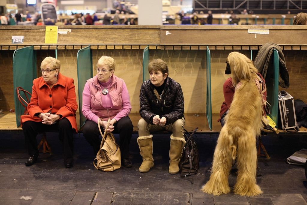 Dogs And Owners Gather For 2013 Crufts Dog Show 37214
