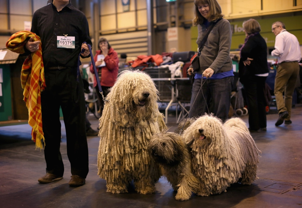 Dogs And Owners Gather For 2013 Crufts Dog Show 37254