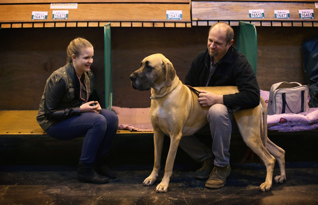Dogs And Owners Gather For 2013 Crufts Dog Show 37275