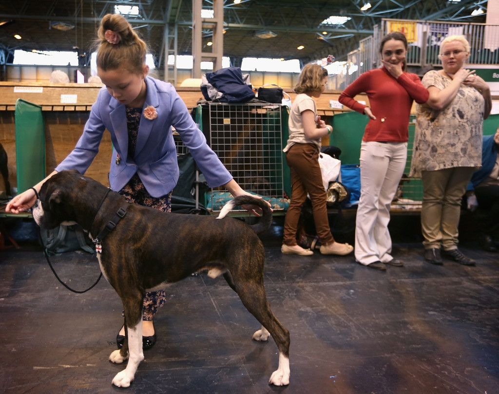 Dogs And Owners Gather For 2013 Crufts Dog Show 37286