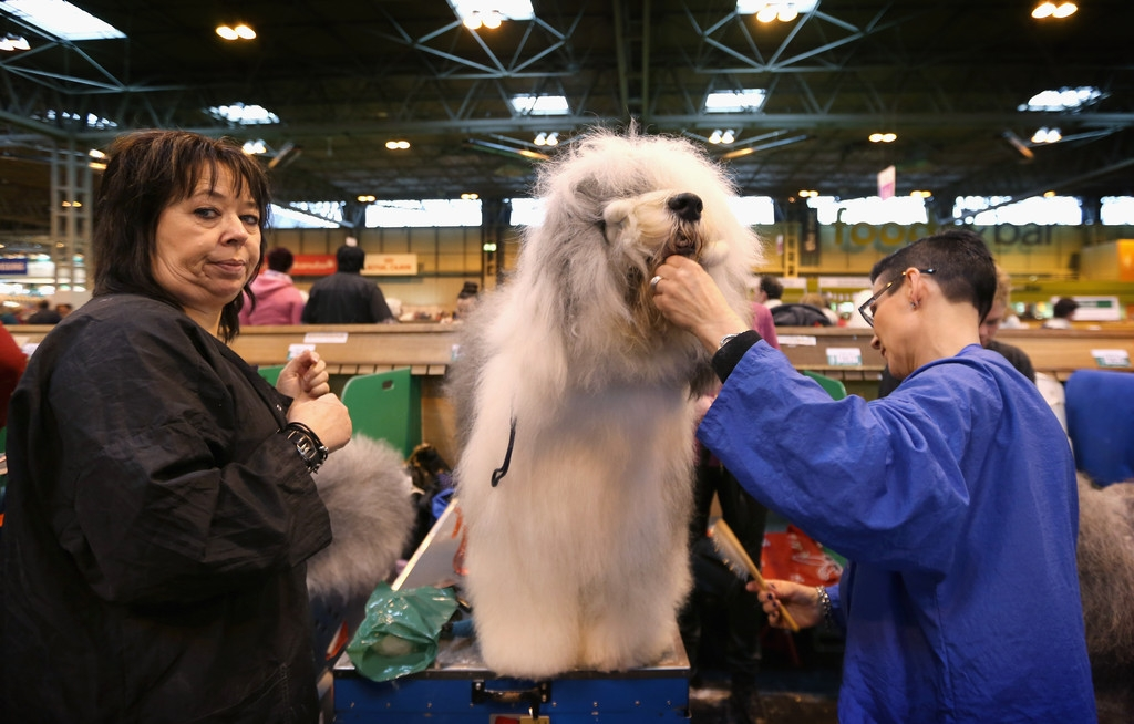 Dogs And Owners Gather For 2013 Crufts Dog Show 37293