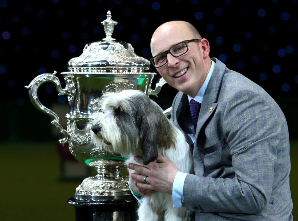 Best In Show Announced At Crufts 40817