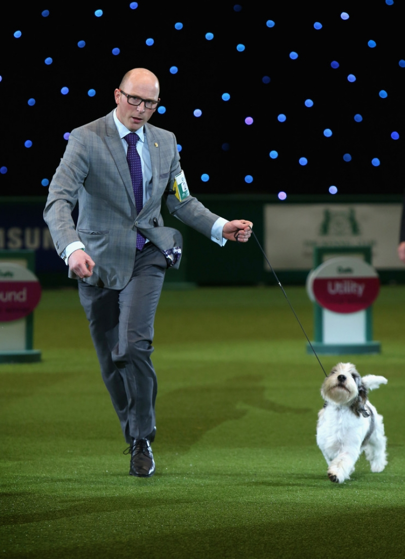 Best In Show Announced At Crufts 40848