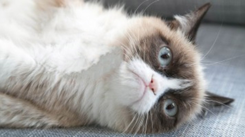Grumpy Cat Lands Movie Role, Stays Unimpressed 44310