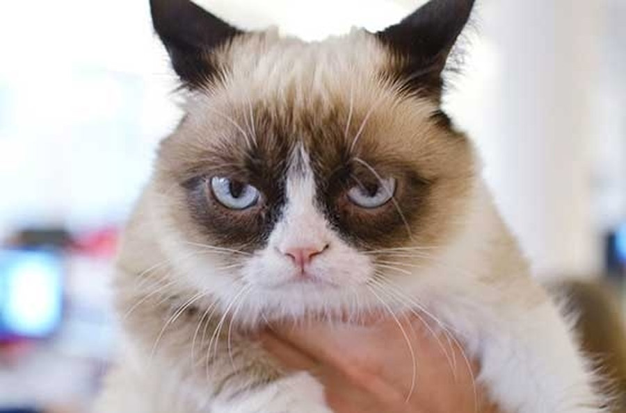Grumpy Cat Just Got A Hollywood Movie Deal 44313
