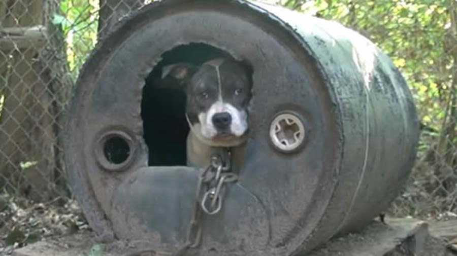 Happy National Dog Day: Joint task-force busts second largest dog-fighting ring in U.S. history 46313