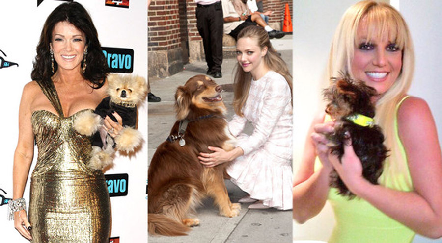 Happy National Dog Day! See Britney Spears', Lisa Vanderpump's and 50 Cent's Dogs on Twitter 46316