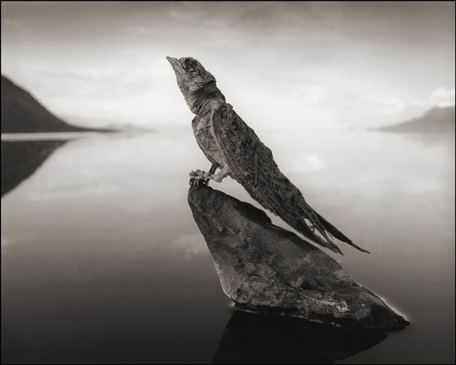 The bird mummies of Natron: Lake's waters petrify animals that fall in 47022