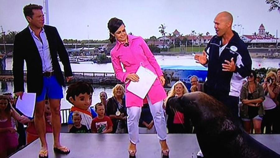 Today Show host Karl Stefanovic shows off his legs, donning some short shorts on TV this morning 47781