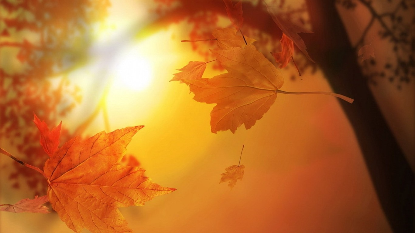 Autumn beautiful computer desktop wallpaper 47804