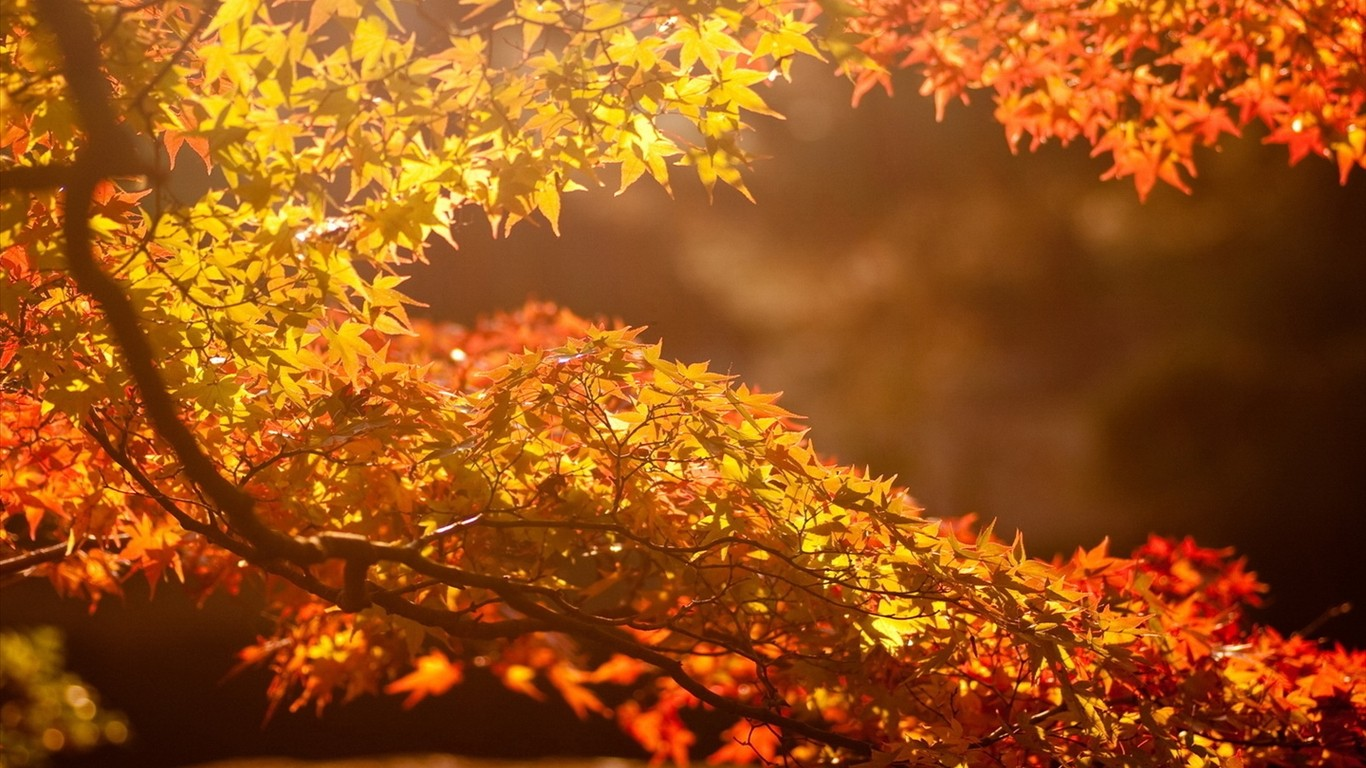 Autumn beautiful computer desktop wallpaper 47871
