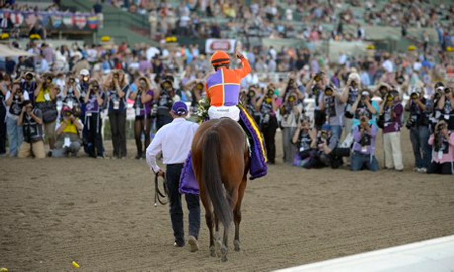 Breeders' Cup 2013 live: Saturday night's action from Santa Anita 47905